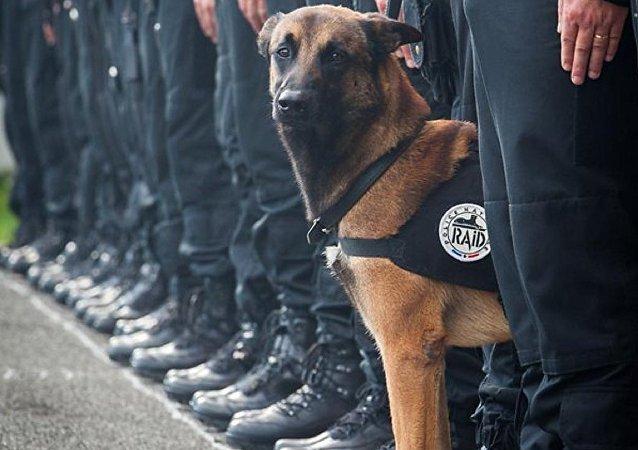 Le chien héros mort à Paris