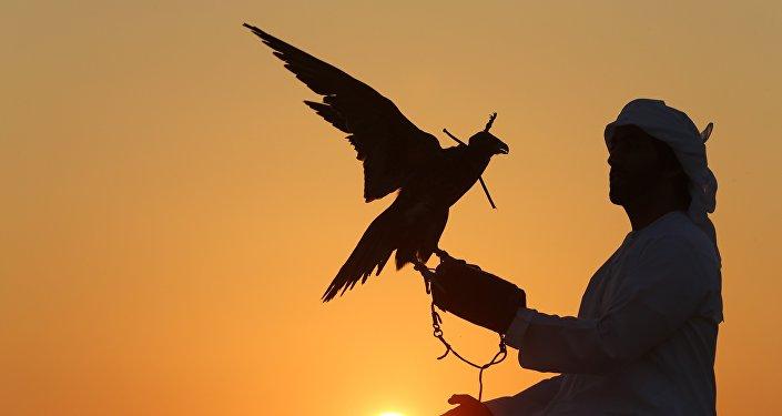 Chasse au faucon. Image d'illustration