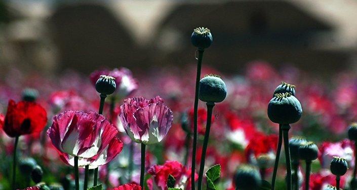 Les talibans s'emparent du paradis de la drogue en Afghanistan