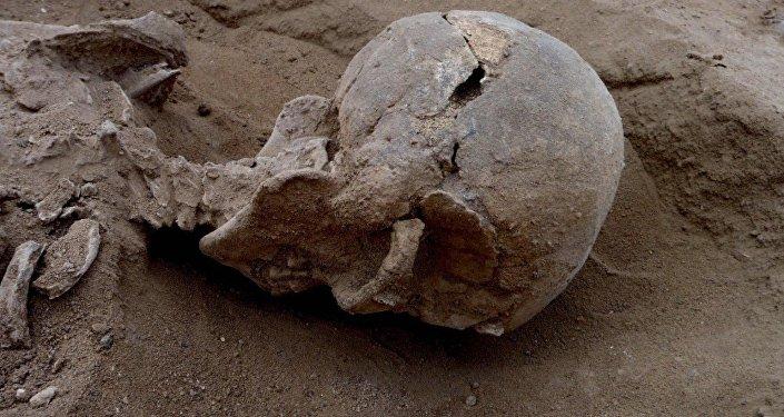 Squelette découverte