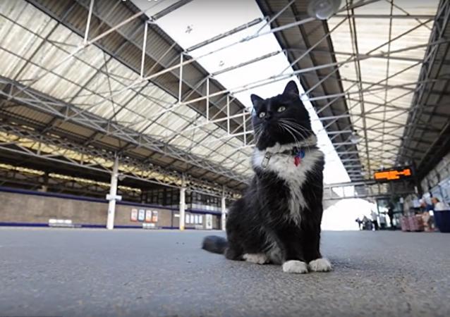 Une chatte promue contrôleuse de gare