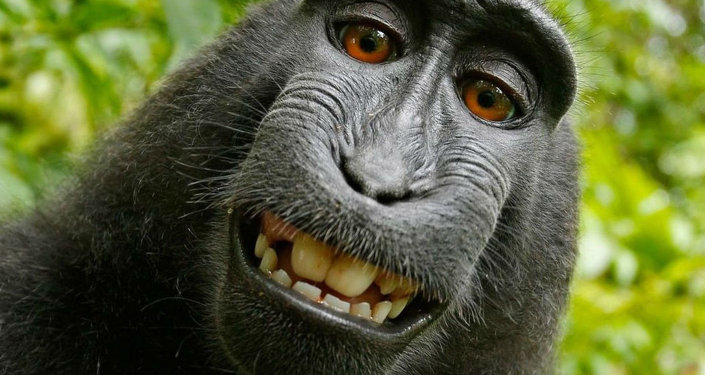 Les ancêtres des singes voyageaient-ils en radeau?