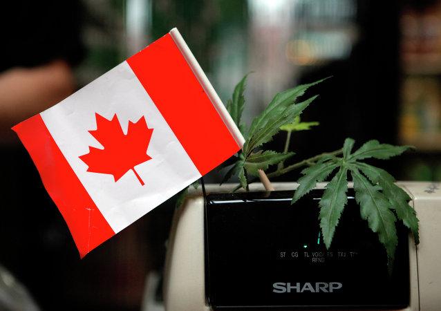 La marijuana pourrait être légalisée au Canada d'ici juillet 2018
