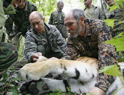 Le premier ministre russe a pris sous son contrôle personnel un programme de sauvegarde du tigre.