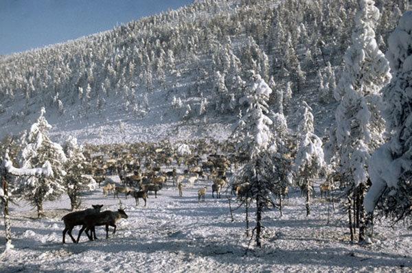 Le village d'Oïmiakon (situé dans le nord-est de la république de Sakha, le long du fleuve Indiguirka) est le pôle du froid de l'hémisphère nord. Le 26 janvier 1926, une température de -71.2°C y a été enregistrée. La température moyenne en hiver y est de -40°C.