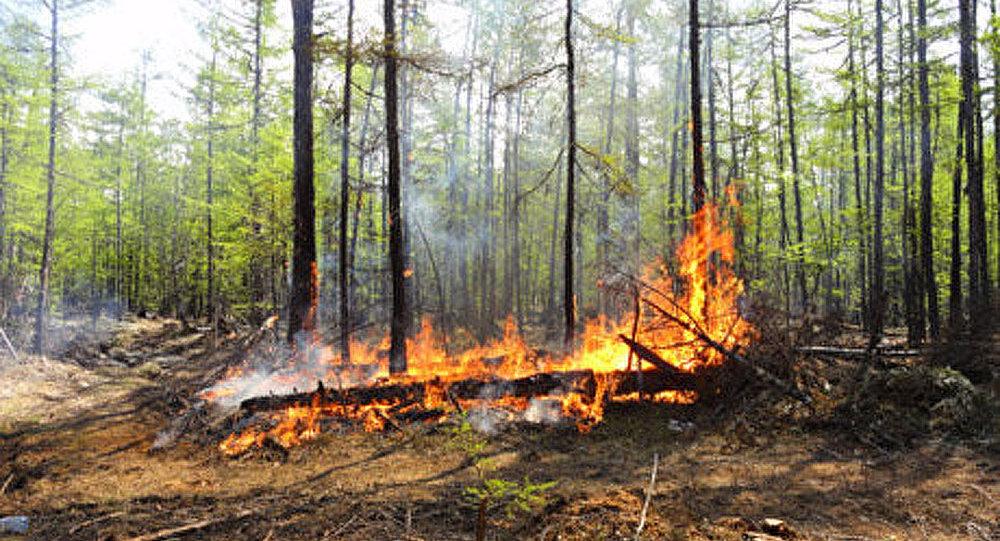 Russie: les incendies naturels se propagent