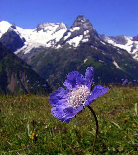 La flore de la réserve Kabardino-Balkarski est variée. On rencontre des plantes de montagne et des lichens jusqu'à 3600 mètres. Dans la ceinture alpine, à 2500-3000 mètres d'altitude on trouve des prés ras. Entre 1400 et 1800 mètres d'altitudes poussent des arbrisseaux et encore plus bas on peut voir des pins, des bouleaux et des chênes
