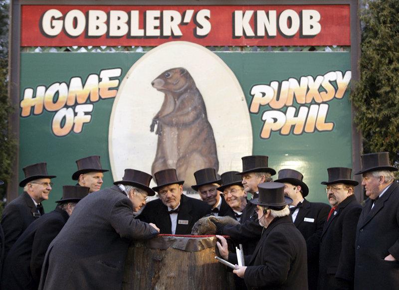 Les Canadiens et les Américains ont la tradition centenaire consistant à réveiller une marmotte chaque année le 2 février pour qu'elle prédise l'arrivée du printemps.