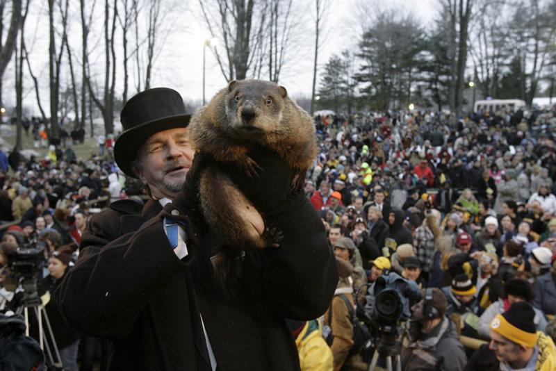 La marmotte Phil de la ville de Punxsutawney (Pennsylvanie) est la plus célèbre du monde. Sa ville natale a reçu le titre de capitale mondiale météorologique.