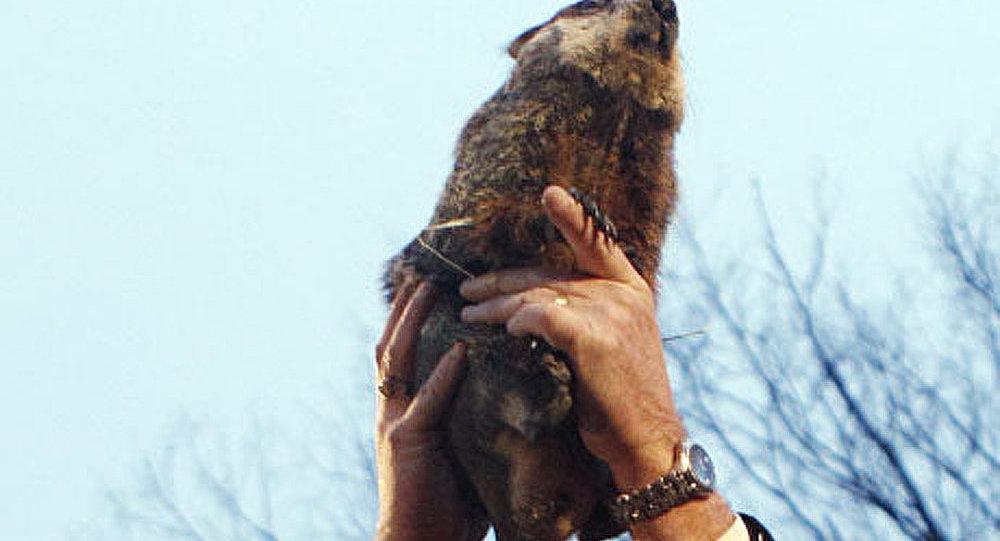 La marmotte Phil a prédit encore six semaines de l'hiver