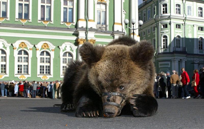 Ours, vodka, matriochka – La Russie à travers les yeux d'un étranger