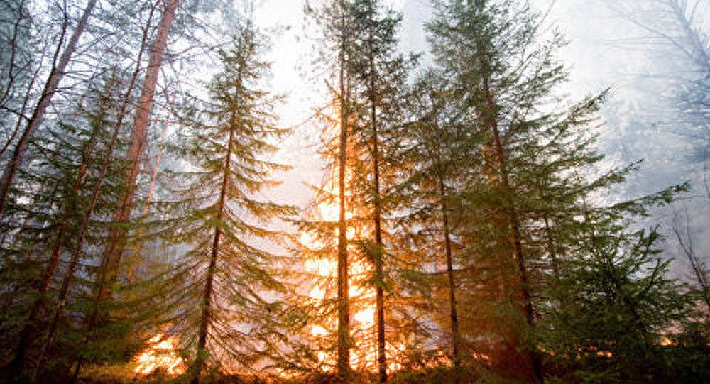 Diminution du nombre d'incendies de forêt en Sibérie