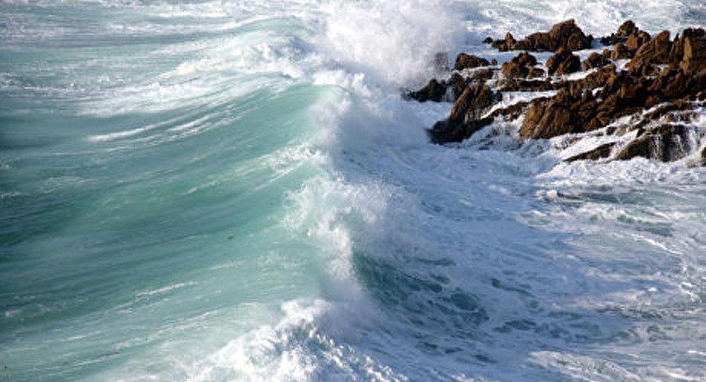 Le plastique et des gerridés sont prêts à changer l'écosystème des océans