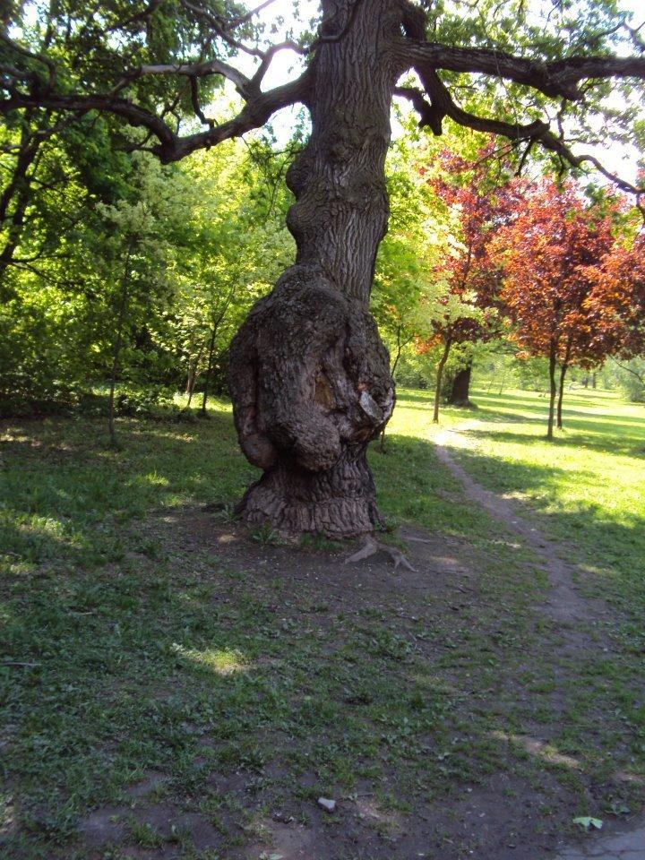 Jardin botanique de Moscou : 130 hectares de bonheur ou comment voir Moscou avec un autre oeil