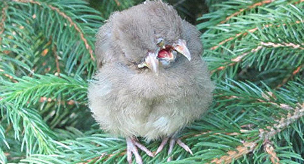 Une Américaine a trouvé un oiseau à deux têtes dans son jardin