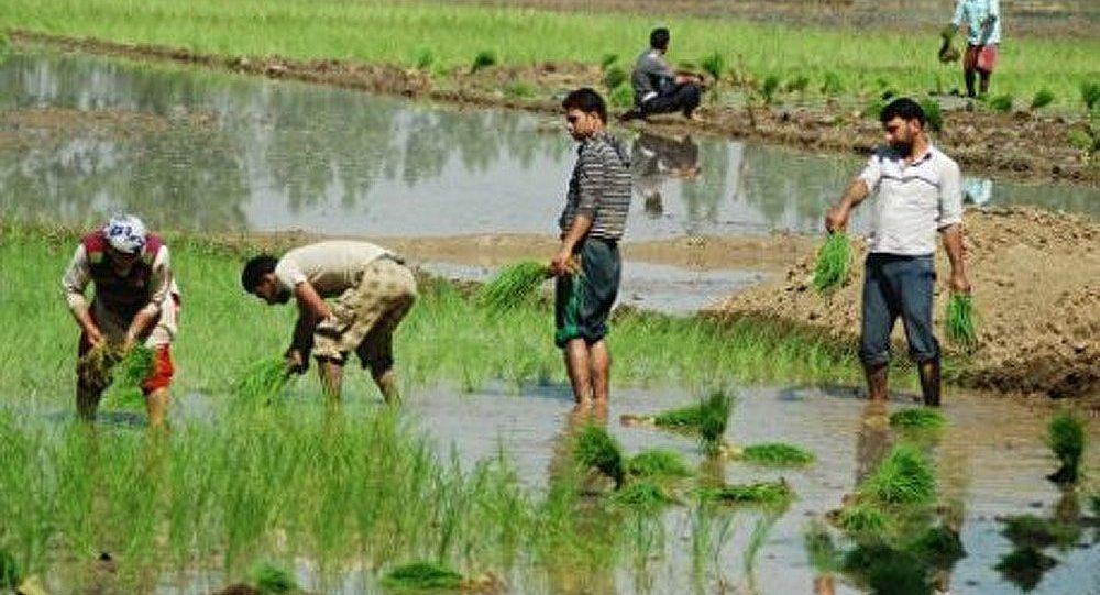 Des travailleurs ont mangé leur employeur en Inde
