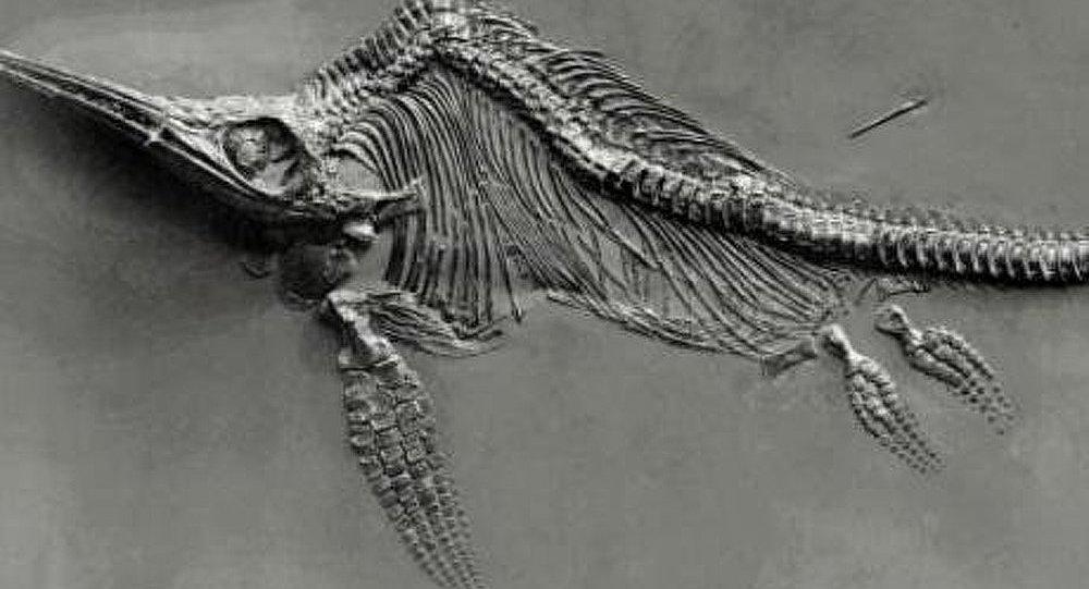 Désert/Nevada : le monstre apparu il y a 244 millions d'années identifié