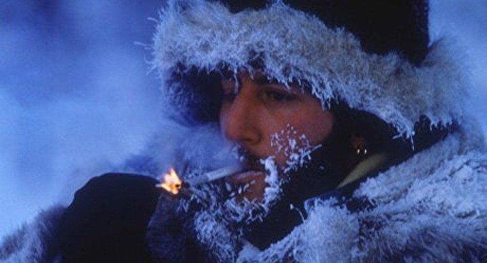 La r sistance au froid est inscrite dans les g nes sputnik france - Camelia resistance au froid ...