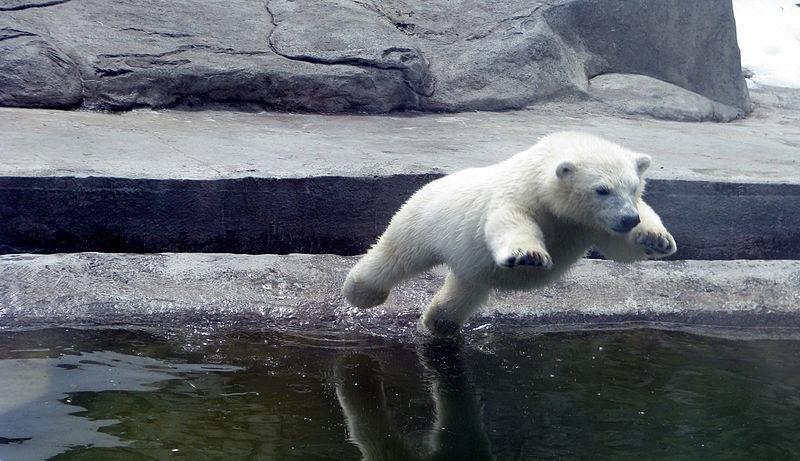 Le parc zoologique de Moscou fête son anniversaire