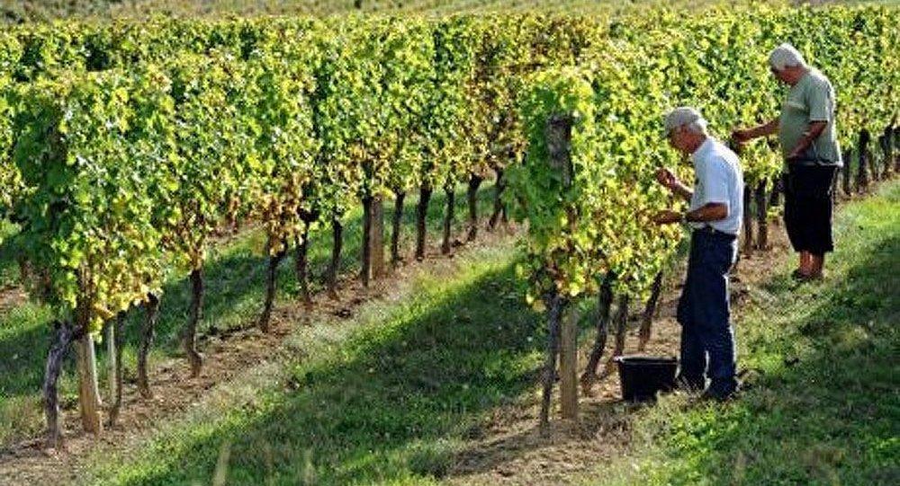 Les vins technologiques tueront-ils le terroir français ?