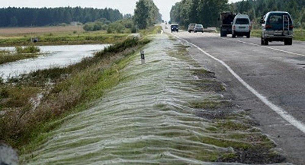 R gion de l amour une toile d araign e g ante s 39 est form e cause des inondations sputnik - Toile d araignee en papier ...