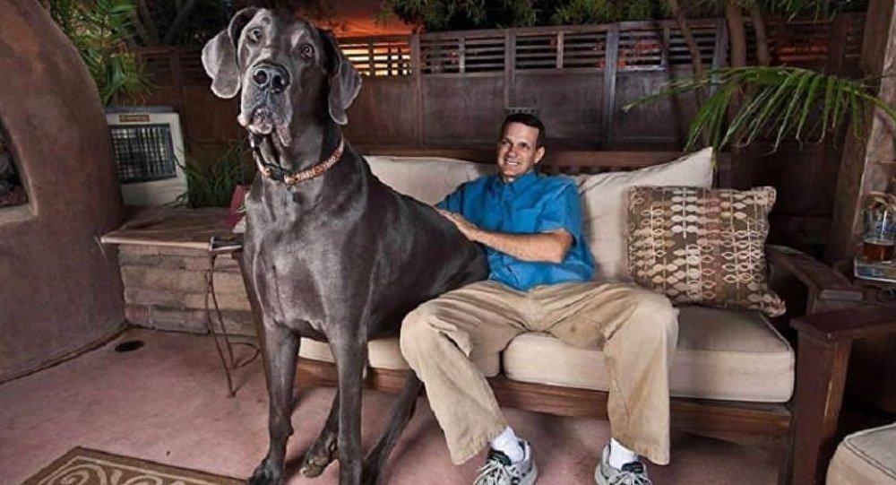 Le chien le plus grand du monde est mort