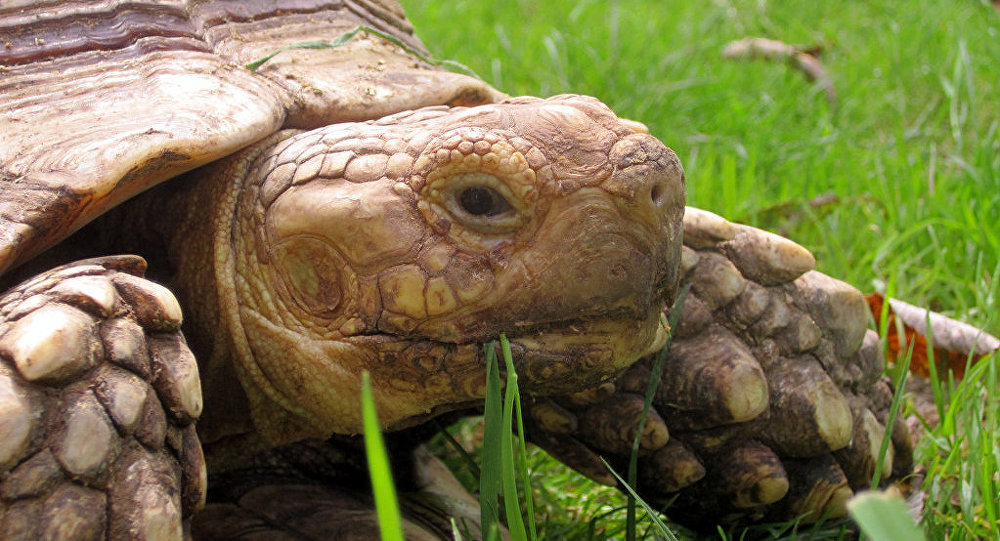 Une tortue