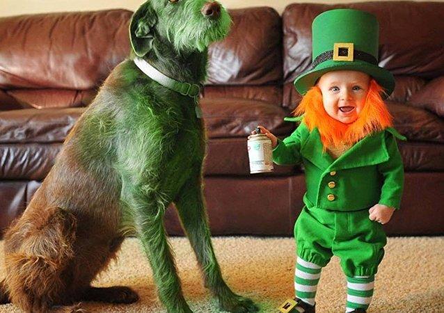 Un petit lutin irlandais