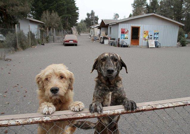 Il adopte des chiens pour leur assurer une vieillesse heureuse