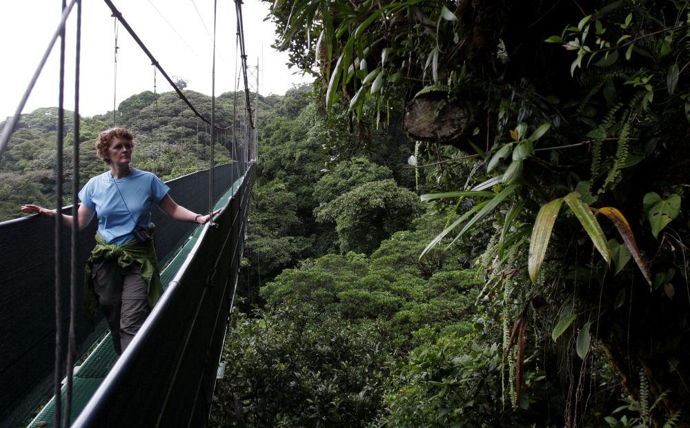 Les forêts les plus surprenantes de la planète