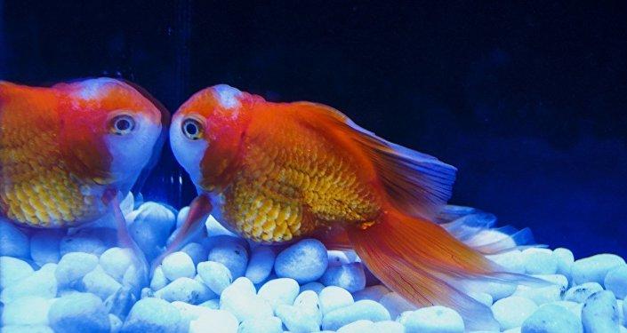 Un poisson rouge