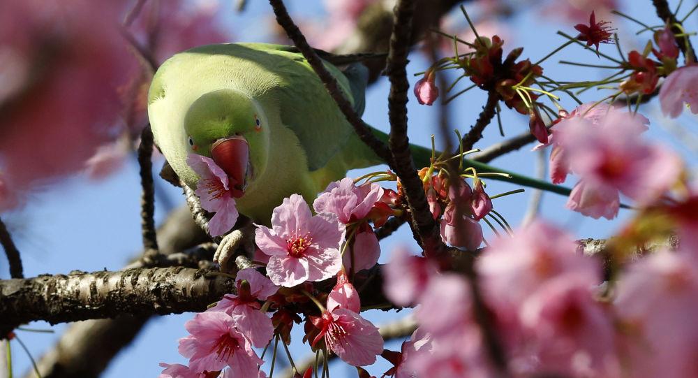 quand tout le japon se transforme en un jardin fleuri sorti dun conte de fe photos - Jardin Fleuri