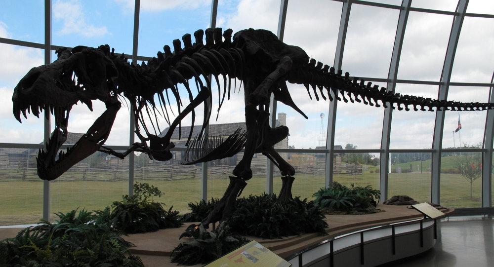 Le squelette d'un dinosaur, Parc d'attractions, Etats-Unis