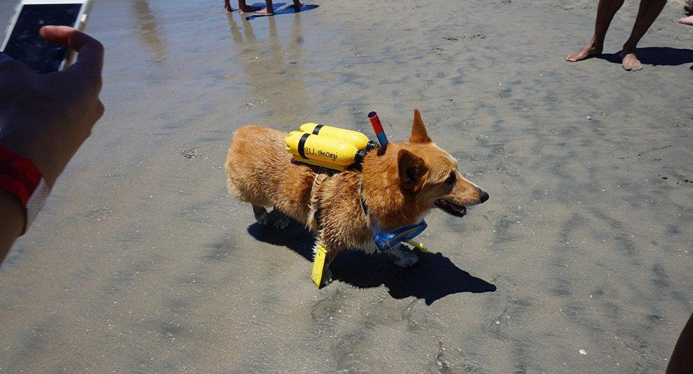 Aux Etats-Unis, une fête sur la plage réservée aux chiens