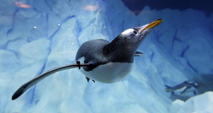 ce pingouin est le coup de c ur de tous les n oz landais et voici pourquoi sputnik france. Black Bedroom Furniture Sets. Home Design Ideas