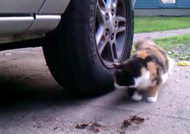Le chat et la souris, ces deux marathoniens