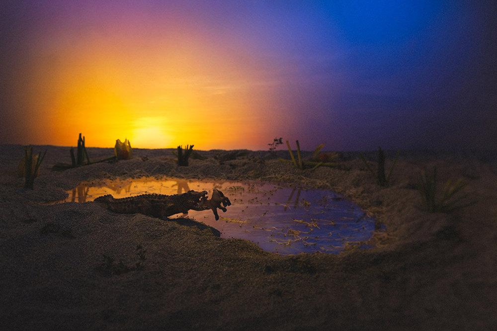Un safari pas comme les autres