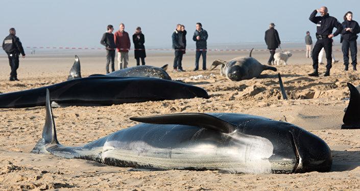 Baleines morts