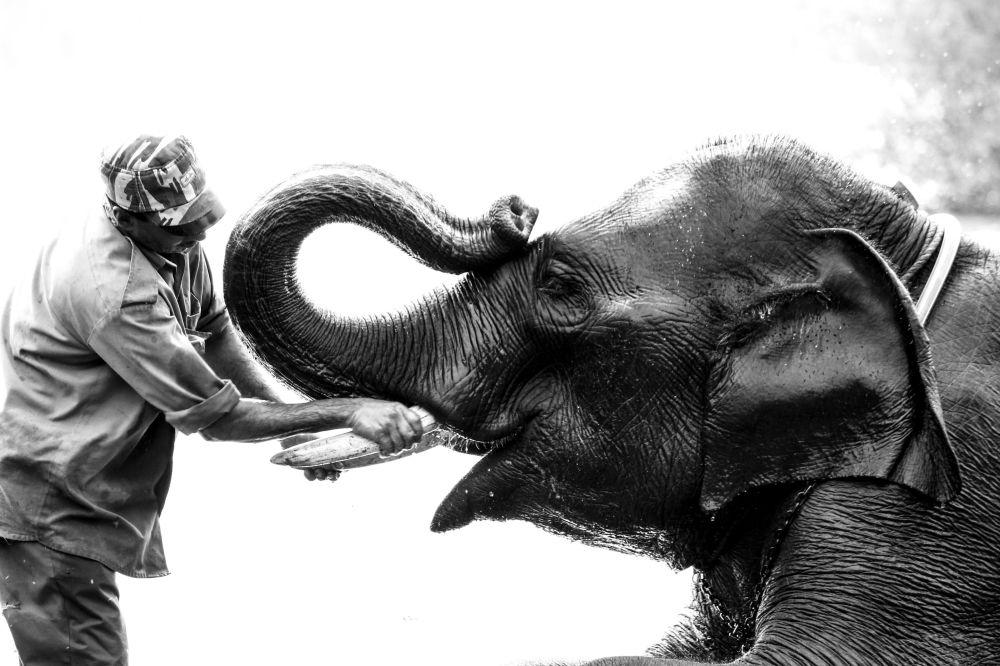 Les photos les plus frappantes du concours National Geographic