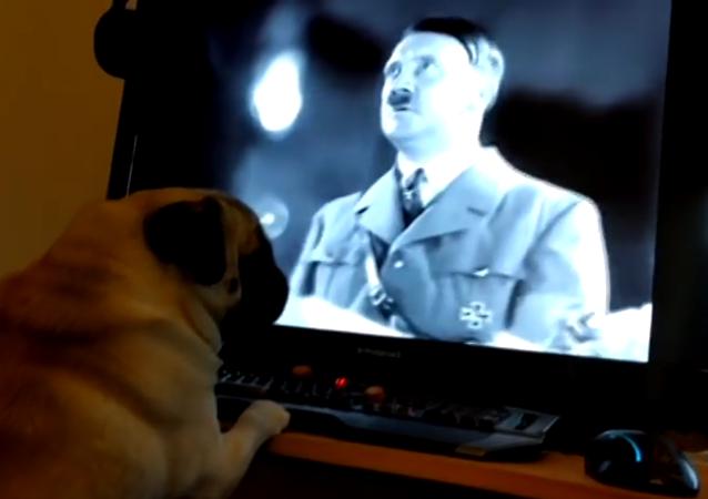 Un carlin nazi