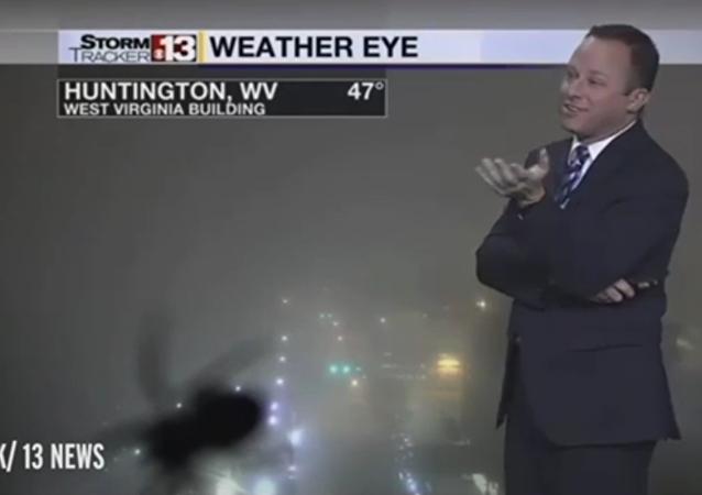 Un présentateur météo effrayé par une araignée en plein direct