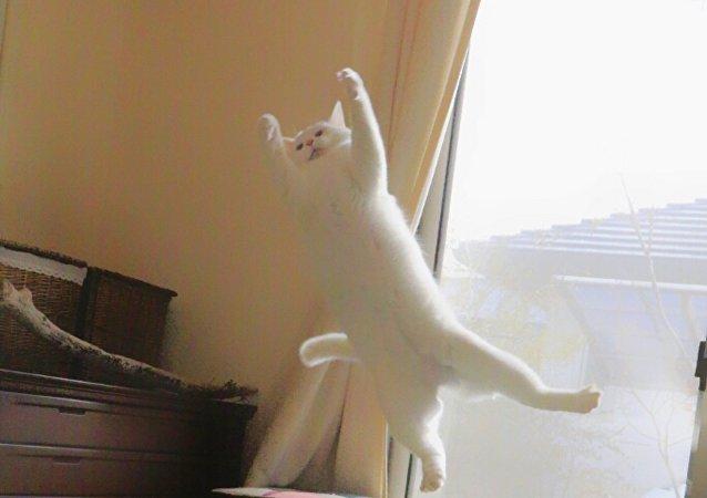 Quand le maître n'est pas là… le chat danse le ballet!