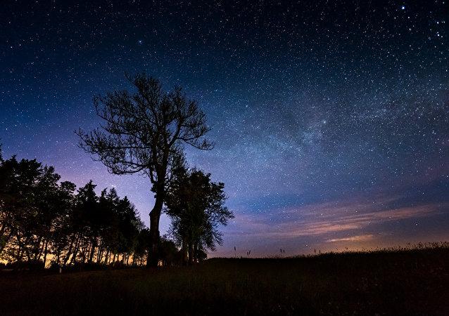 Les arbres s'endorment la nuit