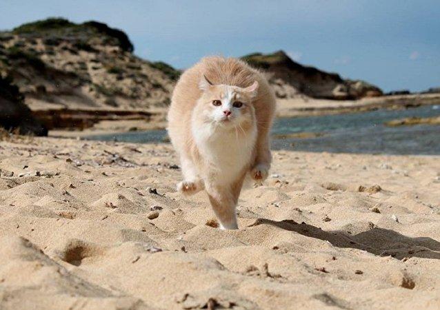 Une plage pour chats en Sardaigne