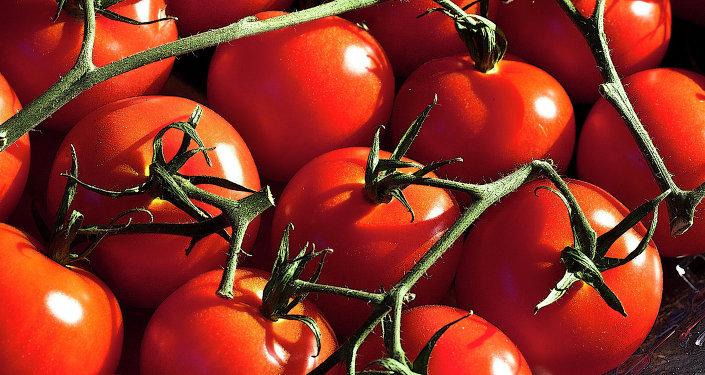 Des tomates japonaises poussent dans le perg lisol en for Vers dans les tomates
