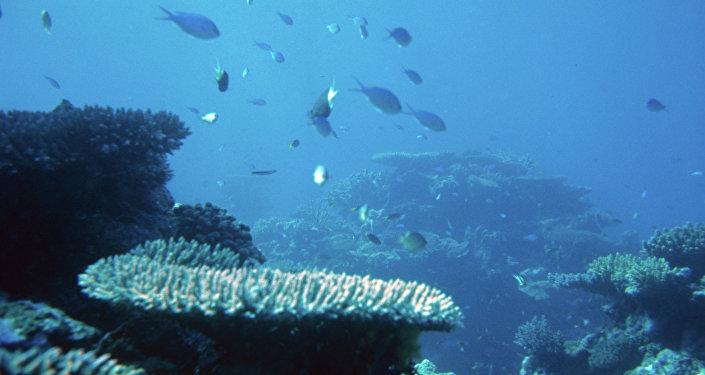 récif corallien, image d'illustration