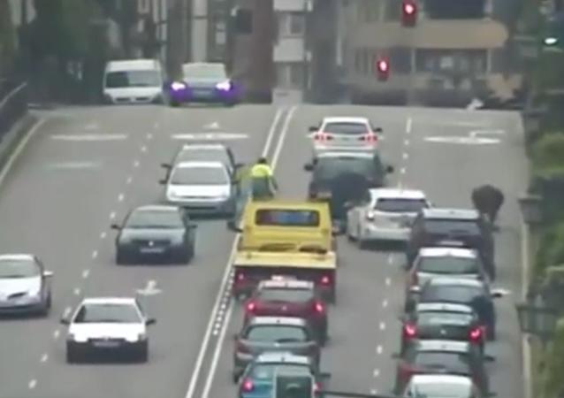 Un taureau provoque un embouteillage