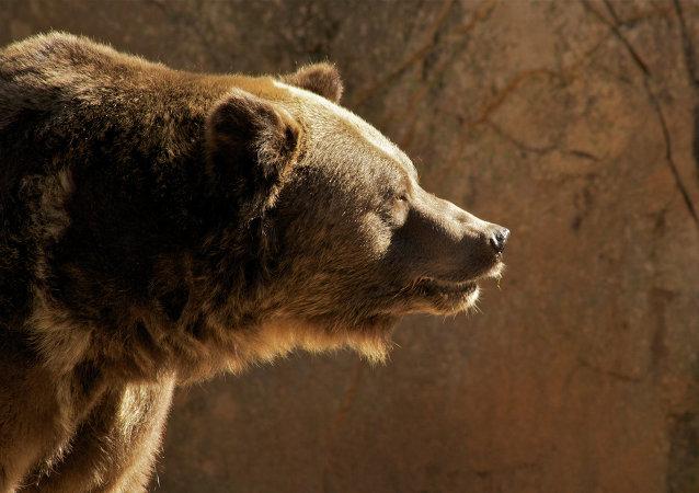 Ours avec une mitrailleuse, homme-vent: ces X-Men russes qui vous surprendront