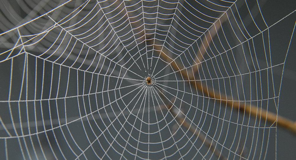 en australie une gigantesque toile d araign 233 e recouvre les arbres d une ville sputnik