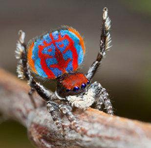 Une araignée